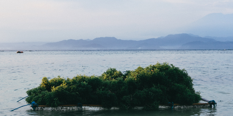 Balinese-Seaweed_800x400